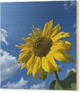 Sunflower And Blue Sky Wood Print