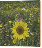 Sunflower And Wildflowers Wood Print
