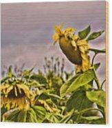 Sunflower Art 2 Wood Print