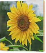 Sunflower Art 3 Wood Print