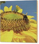 Sunflower Art Prints Honey Bee Sun Flower Floral Garden Wood Print