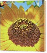 Sunflower Art Prints Orange Yellow Floral Garden Baslee Troutman Wood Print