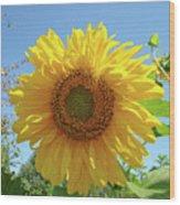 Sunflower Art Prints Sun Flower 2 Giclee Prints Baslee Troutman Wood Print