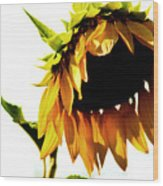 Sunflower Art Wood Print