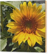 Sunflower Art- Summer Sun- Sunflowers Wood Print