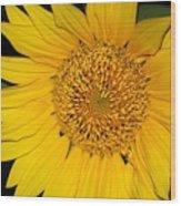 Sunflower At Dusk Wood Print