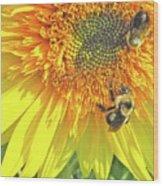 Sunflower Bees Wood Print