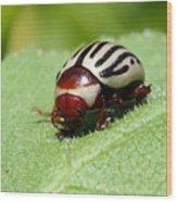 Sunflower Beetle Wood Print