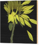 Sunflower Breeze Wood Print