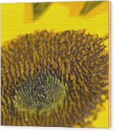 Sunflower Close-up Wood Print
