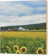 Sunflower Country Landscape  Wood Print