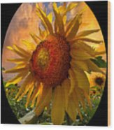 Sunflower Dawn In Oval Wood Print