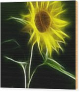 Sunflower Display Wood Print