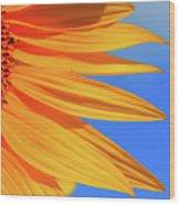 Sunflower Elegance Wood Print