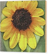 Sunflower Expressed Wood Print