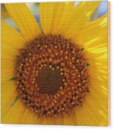Sunflower Face Wood Print