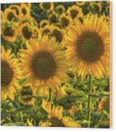 Sunflower Family Wood Print