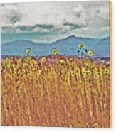 Sunflower Field 1 Wood Print
