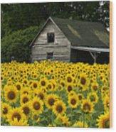 Sunflower Field And Barn Wood Print