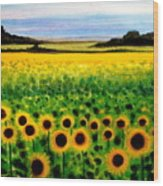 Sunflower Field Wood Print
