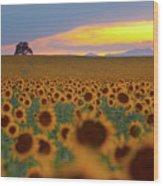Sunflower Field Wood Print by Lightvision, LLC
