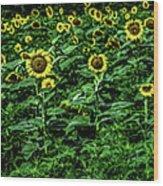 Sunflower Field Panorama Wood Print