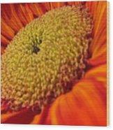 Sunflower Fire 1 Wood Print
