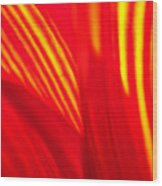 Sunflower Fire 3 Wood Print