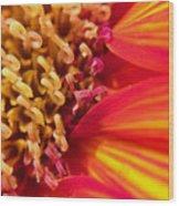 Sunflower Fire 4 Wood Print
