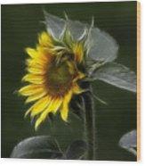 Sunflower Fractalius Beauty Wood Print