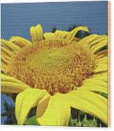 Sunflower Garden Art Print Yellow Summer Sun Flower Baslee Wood Print