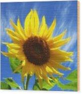 Sunflower Glow Wood Print