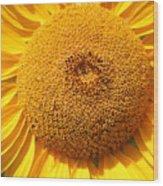Sunflower Head  Wood Print