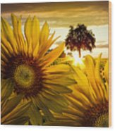 Sunflower Heaven Wood Print
