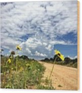 Sunflower Hitchhikers Wood Print