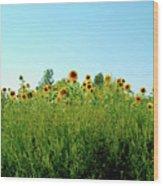Sunflower Horizon Wood Print
