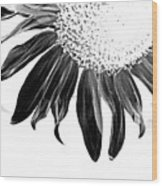 Sunflower In Corner Bw Threshold Wood Print