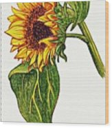 Sunflower In Gouache Wood Print