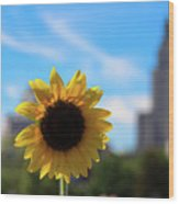 Sunflower In Providence Wood Print