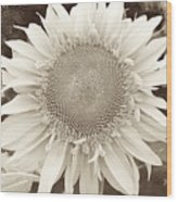 Sunflower In Soft Sepia Wood Print