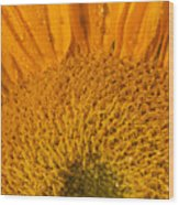 Sunflower In The Morning Dew Wood Print