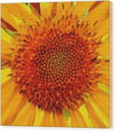 Sunflower In The Sun Wood Print