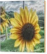 Sunflower In Town Wood Print