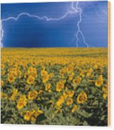 Sunflower Lightning Field  Wood Print by James BO  Insogna