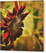 Sunflower Wood Print by Lois Bryan