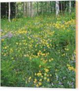 Sunflower Meadow Wood Print