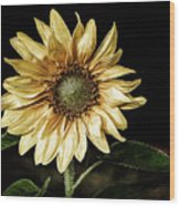 Sunflower Modified Wood Print