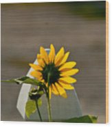 Sunflower Morning Wood Print