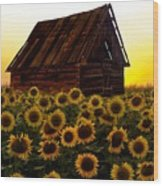Sunflower Morning With Barn Wood Print