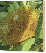 sunflower No.2 Wood Print